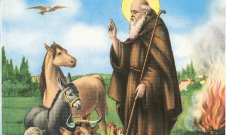 Sant'Antonio Abate: le celebrazioni in Diocesi