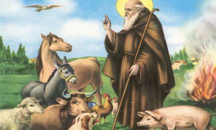 Festa di Sant'Antonio Abate: le celebrazioni in diocesi