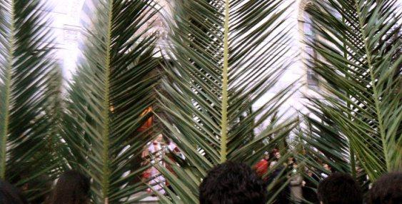 La Consegna delle Palme a Bedonia