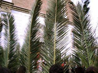 Domenica delle Palme: processione con il vescovo